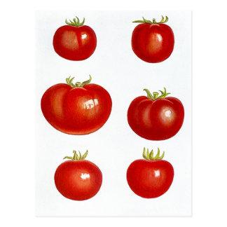 Mercado de los granjeros de los tomates del jardín postal