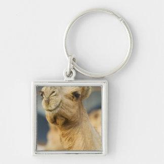 Mercado del camello cerca de El Cairo, Egipto Llavero Cuadrado Plateado
