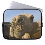 Mercado del camello, El Cairo, Egipto Mangas Computadora