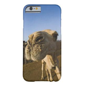Mercado del camello, El Cairo, Egipto Funda Para iPhone 6 Barely There
