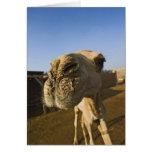 Mercado del camello, El Cairo, Egipto Tarjeta De Felicitación