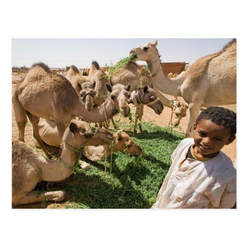 Mercado del camello postal