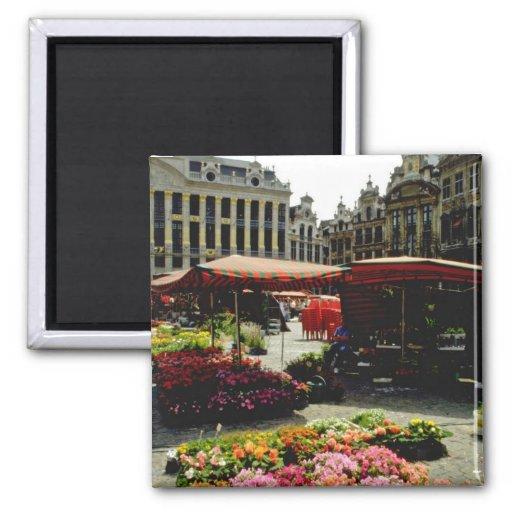 Mercado rosado de la flor en la plaza principal, B Imanes Para Frigoríficos