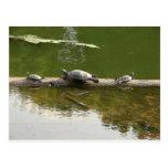 mercancía del reptil postales