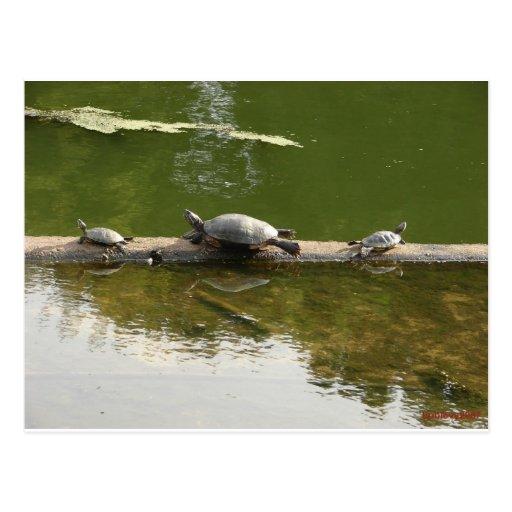 mercancía del reptil tarjeta postal