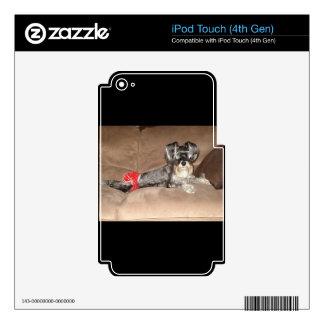 Mercancía del Schnauzer iPod Touch 4G Calcomanías