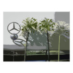 MERCEDES & AGAPANTHUS POSTERS