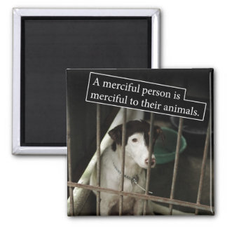 Merciful to Animals Square Magnet