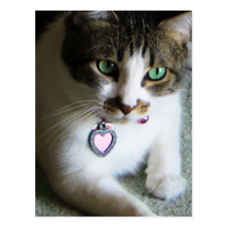 Mercutio, the Contemplative Cat Postcard