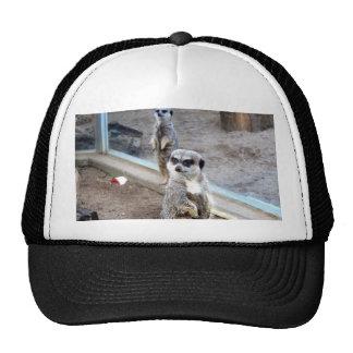 Mere Cats Trucker Hat