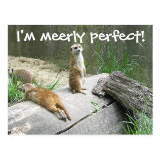 Merely Perfect Meerkat Postcard