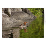 Merganser and Babies Greeting Card