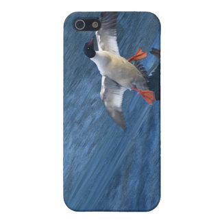 Merganser Duck iPhone Case Cover For iPhone 5