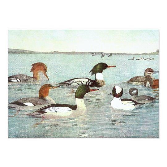Merganser & Ruddy Duck Design Card