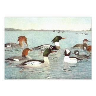 Merganser Ruddy Duck Design Announcements