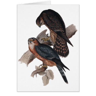 Merlin Card