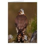 Merlin Falcon Greeting Card