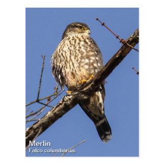Merlin Postcard