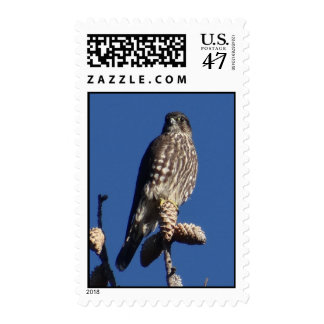 merlin stamp