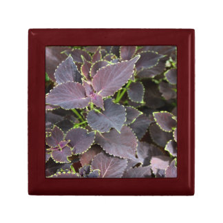 Merlot Coleus Giftbox Keepsake Box