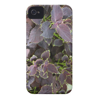 Merlot Coleus iPhone 4 Barely There Case-Mate iPhone 4 Case