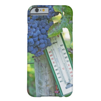 Merlot grapes at Chateau la Grave Figeac, a Barely There iPhone 6 Case