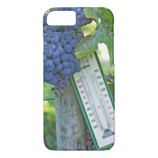 Merlot grapes at Chateau la Grave Figeac, a iPhone 8/7 Case