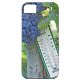 Merlot grapes at Chateau la Grave Figeac, a iPhone SE/5/5s Case