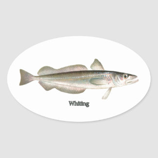 Merluza de plata - pescadillas pegatina ovalada