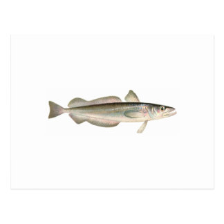 Merluza de plata - pescadillas postales
