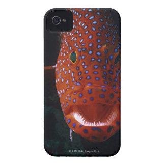 Mero de la joya, miniata de Cephalopholis iPhone 4 Cárcasa