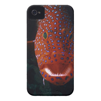 Mero de la joya, miniata de Cephalopholis Case-Mate iPhone 4 Fundas