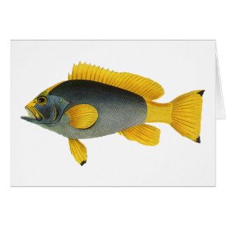 Mero de los pescados de la vida marina del tarjeta de felicitación