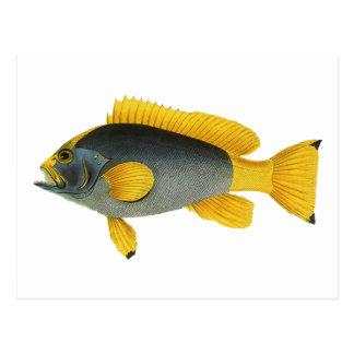 Mero de los pescados de la vida marina del tarjeta postal