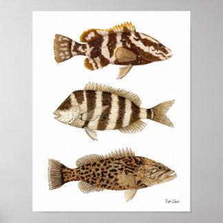 Mero de Nassau de los gamefish, Sheepshead y mero  Póster