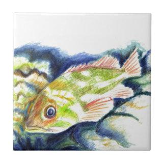 Mero - dibujo de lápiz de la acuarela azulejo cuadrado pequeño