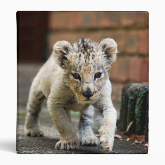 Merodeador del león del bebé