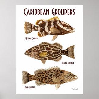 Meros del Caribe Póster