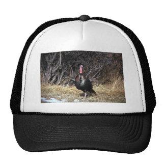 Merriams wild turkey, gobbler mesh hat