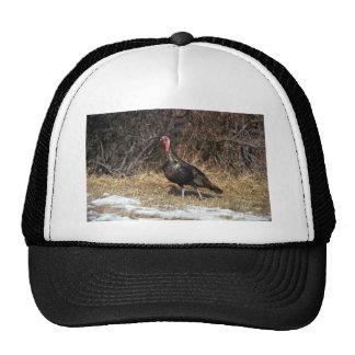Merriams wild turkey, gobbler trucker hats