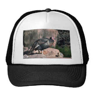 Merriams wild turkey, gobbler hats