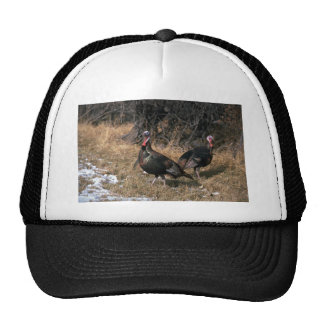 Merriams wild turkeys, gobblers mesh hats