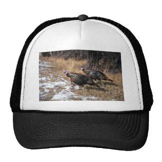 Merriams wild turkeys, gobblers hat