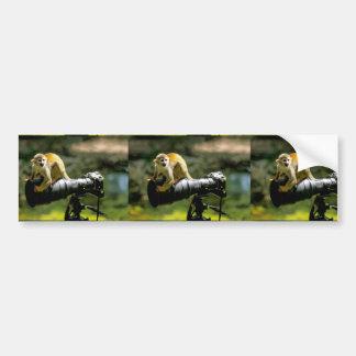 merry animal photo, small ape on telephoto, bumper sticker
