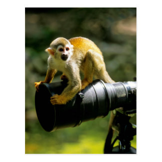 merry animal photo, small ape on telephoto, postcard