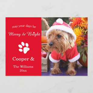 60% Off Pet Christmas Cards – Shop Now to Save | Zazzle