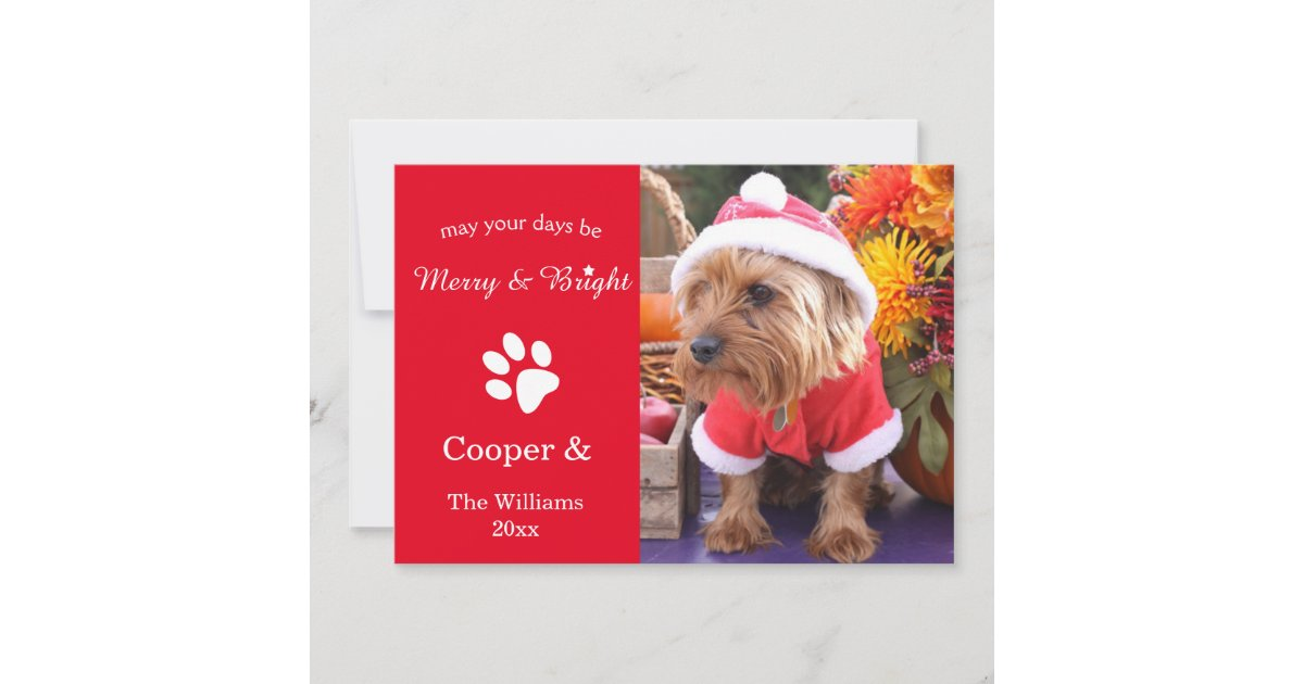 Bright Custom Christmas Pet Photo Card
