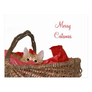 Merry Catsmas Postcard