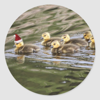 Merry Christmas Baby Geese Classic Round Sticker