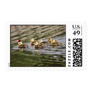Merry Christmas Baby Geese Postage
